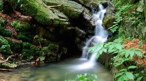 Kvarner's green oasis of Gorski kotar
