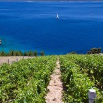 Visit the vineyards in Istria